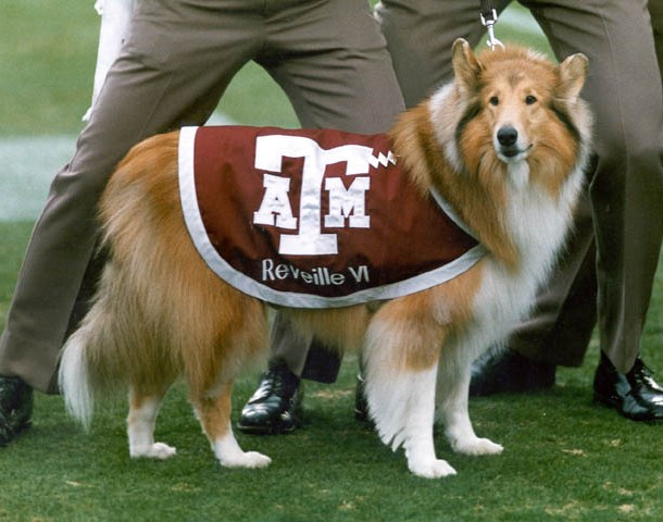 who hit reveille View lab report - exp10 forensic biology from bio 111 at texas a&m university  dang vu biology lab section 537 ta: jerry escano who hit reveille.